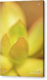 Acrylic Print featuring the photograph Find Focus In Nature by Ana V Ramirez