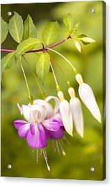 Finding Fuchsia Acrylic Print