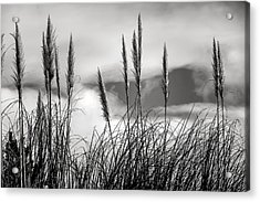 Fine Art Black And White-188 Acrylic Print