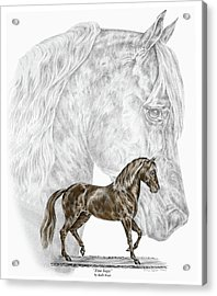 Fine Steps - Paso Fino Horse Print Color Tinted Acrylic Print