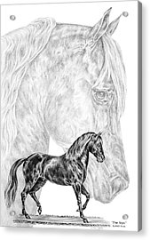 Fine Steps - Paso Fino Horse Print Acrylic Print