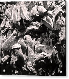 Acrylic Print featuring the photograph Fingers Of Time - Giant Oyster Shell Fossils by Menega Sabidussi