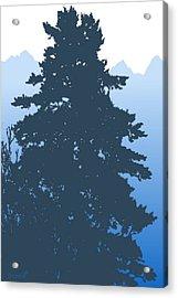 Fir At Dusk Acrylic Print by Robert Bissett