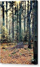Fir Forest-2 Acrylic Print by Henryk Gorecki