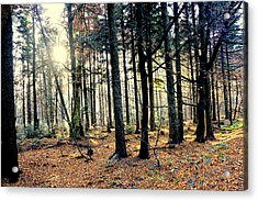 Fir Forest-3 Acrylic Print