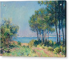 Fir Trees At Varengeville Acrylic Print by Claude Monet