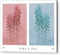 Fire And Ice Acrylic Print