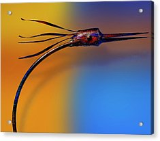 Acrylic Print featuring the photograph Fire Bird by Paul Wear