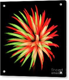 Fire Burst Acrylic Print