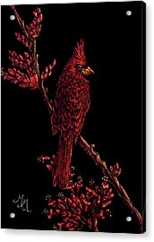 Fire Cardinal Acrylic Print