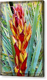 Fire Dance Of The Blue Agave Acrylic Print