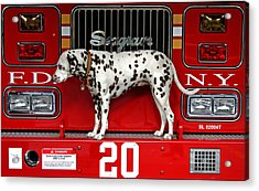 Fire Dog Acrylic Print by Bryan Hochman