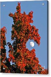 Fire Dragon Tree Eats Moon Acrylic Print by CML Brown