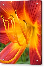 Fire Flower Acrylic Print