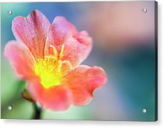 Acrylic Print featuring the photograph Fire From Within by Christi Kraft