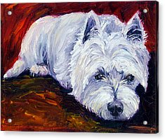 Fire Glow - West Highland White Terrier Acrylic Print by Lyn Cook