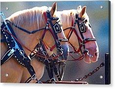 Fire Horses Acrylic Print