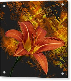 Fire Lilly Acrylic Print by Rick Friedle