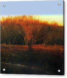 Fire Tree 2 Acrylic Print