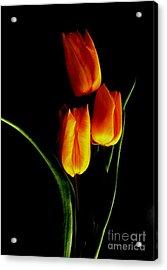 Fire Tulips Acrylic Print by Valia Bradshaw