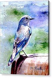 Firehole Bridge Bluebird - Female Acrylic Print