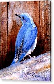 Firehole Bridge Bluebird - Male Acrylic Print