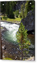 Firehole Fin Acrylic Print by Marty Koch