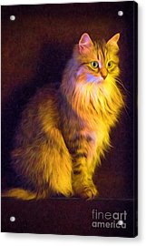 Fireside Feline Acrylic Print