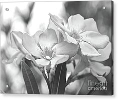 Acrylic Print featuring the photograph Firewalker Sw1 by Wilhelm Hufnagl