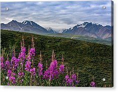 Acrylic Print featuring the photograph Fireweed In Denali by Claudia Abbott