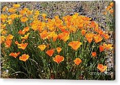 First Bloom Acrylic Print by Gail Salitui
