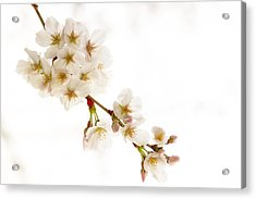 Acrylic Print featuring the photograph first blossoms on the Basin by Edward Kreis