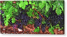 First Came The Grape Acrylic Print