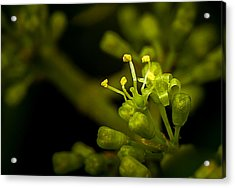Acrylic Print featuring the photograph First Flower by Len Romanick