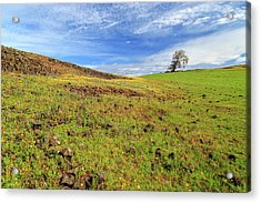 Acrylic Print featuring the photograph First Flowers On North Table Mountain by James Eddy