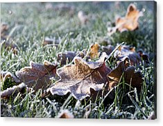 First Frost Acrylic Print