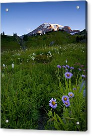 Aster Acrylic Print featuring the photograph First Light by Mike  Dawson