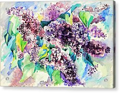 First Lilac. Acrylic Print by Anastasia Michaels