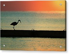First On The Jetty Acrylic Print