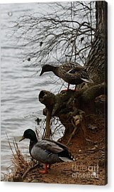 Acrylic Print featuring the photograph First One In by Kim Henderson