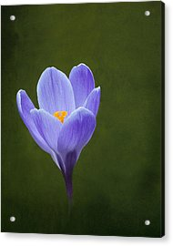 First Sign Of Spring Acrylic Print