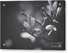 First Signs Of Spring -georgia Acrylic Print