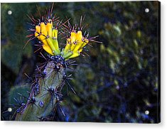 First Signs Of Spring On The Sonoran Desert Acrylic Print