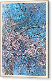 First Snow At Dawn Acrylic Print