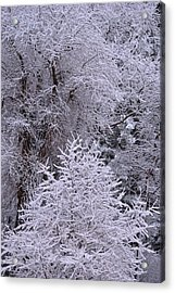 First Snow I Acrylic Print