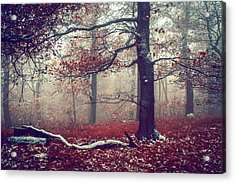 First Snow In Fall Woods Acrylic Print by Jenny Rainbow