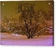 First Snowfall Acrylic Print by Sherwanda Irvin