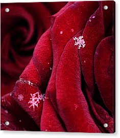 First Snowflakes With Love Acrylic Print by Floriana Barbu