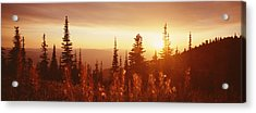 Firweed At Sunset, Whitefish, Montana Acrylic Print by Panoramic Images