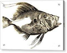 Fish Acrylic Print by Antonio Lafreri